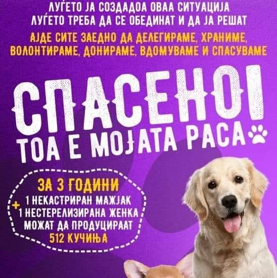 Прифатилиште за кучиња